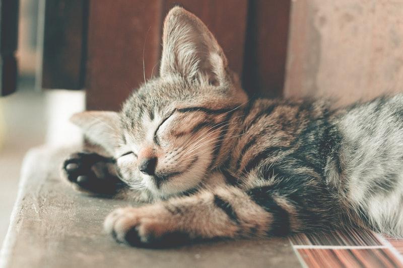 Ingin Pelihara Kucing Liar Yuk Kenali Perilakunya Dan Hal Penting Sebelum Adopsi